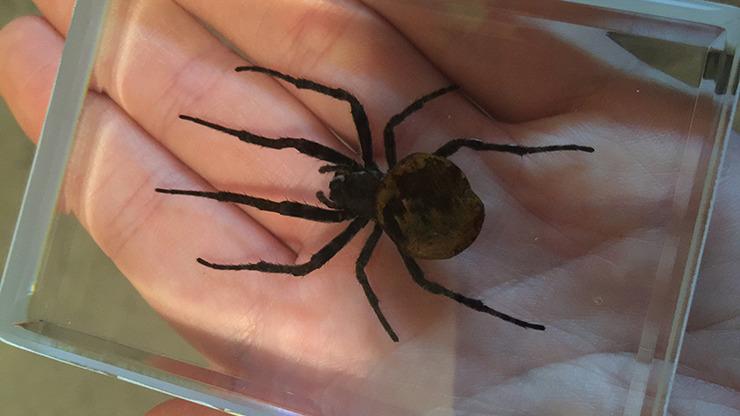 Ominous Deck (Spider) by Diamond Jim Tyler