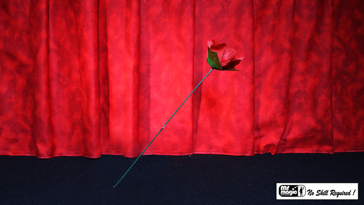 Torch to Rose by Mr. Magic