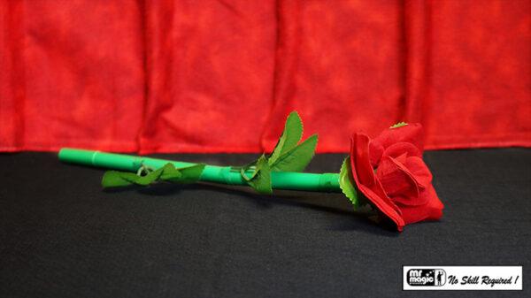 Break Away Rose by Mr. Magic