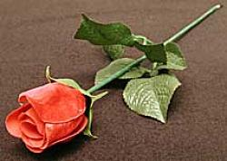 Appearing Rose